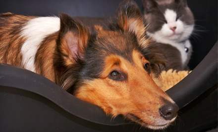 One Poop-Scoop Service for Up to 1 Hour (a $30 value) - Home Buddies by Camp Bow Wow in