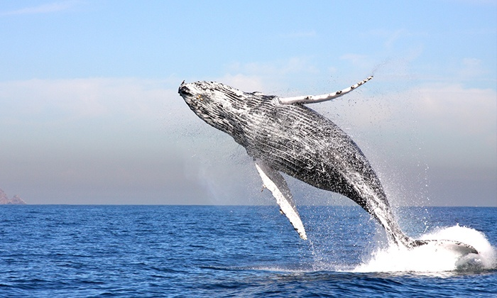 Channel Islands Whale Watching - Oxnard: Three-Hour Cruise for One, Two, or Four from Channel Islands Whale Watching (Up to 50% Off)
