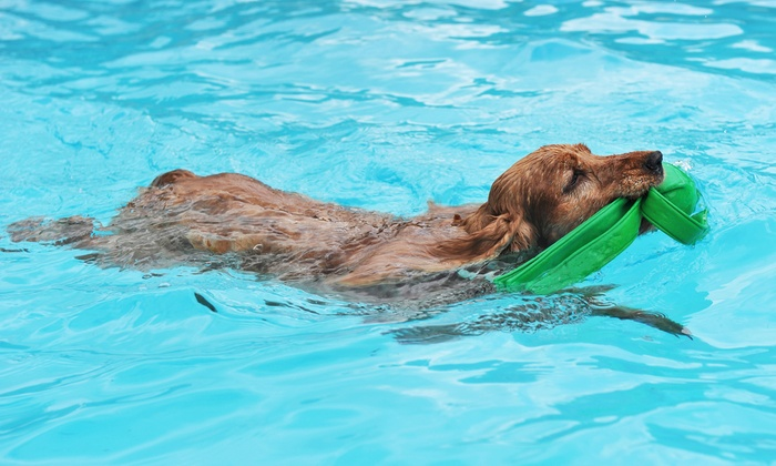Alpha Dog Club - Tuckahoe: Dog Swimming Packages with Intro and Birthday Swims at Alpha Dog Club (Up to 61% Off)