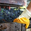 Half Off Winemaking Class & Tasting