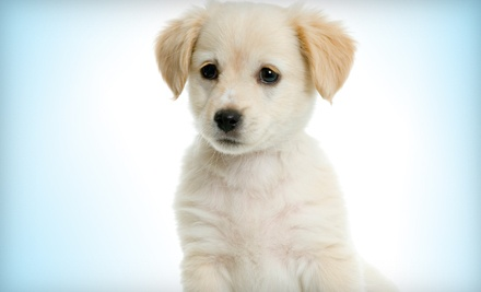 $45 Groupon Worth of Dog Grooming  - Central Bark Doggy Day Care in Milwaukee