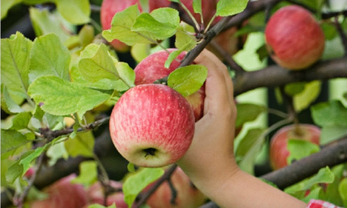 Fruit Trees to Go - Vaughan: One, Three, or Five Live Fruit Trees with Delivery and Planting from Fruit Trees to Go (Up to 63% Off)