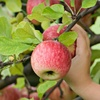 Up to 63% Off from Fruit Trees to Go