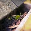 Up to 59% Off Gutter or Exterior Home Cleaning