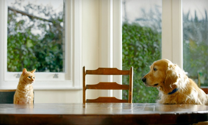 PetFoodDirect.com: $15 for $30 Worth of Pet Food, Toys, and Accessories from PetFoodDirect.com