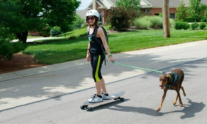 Buddy Boarding: One or Three Dog Evaluations and 30-Minute Jogging Sessions from Buddy Boarding (Up to 60% Off)
