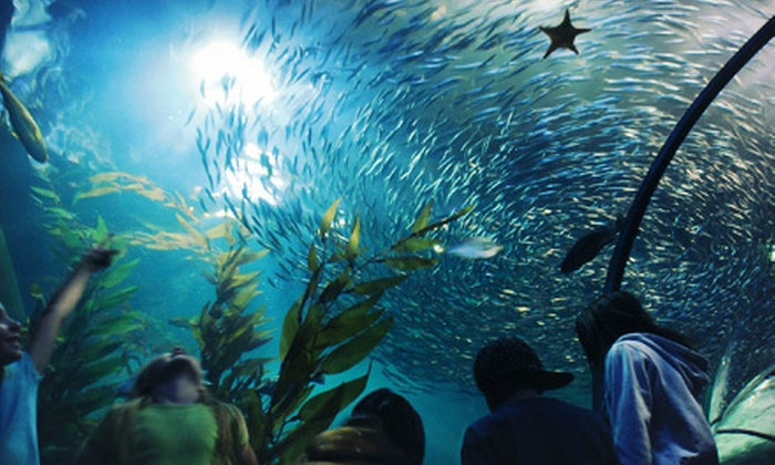 Experience the magic of San Francisco Bay at Aquarium of the Bay, where 20, aquatic animals are waiting to greet you. Walk through massive tunnels of sharks, bat rays, and swirling schools of anchovies and get hands-on experience with the animals. Buy your tickets, ticket packages and other passes here.