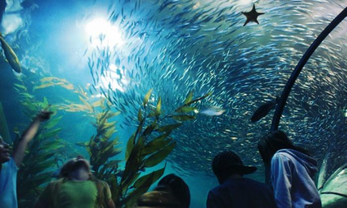 Aquarium of the Bay - Fisherman's Wharf, North Beach/Telegraph Hill: One Individual, Family, or Family Plus Membership to Aquarium of the Bay (Up to 52% Off)