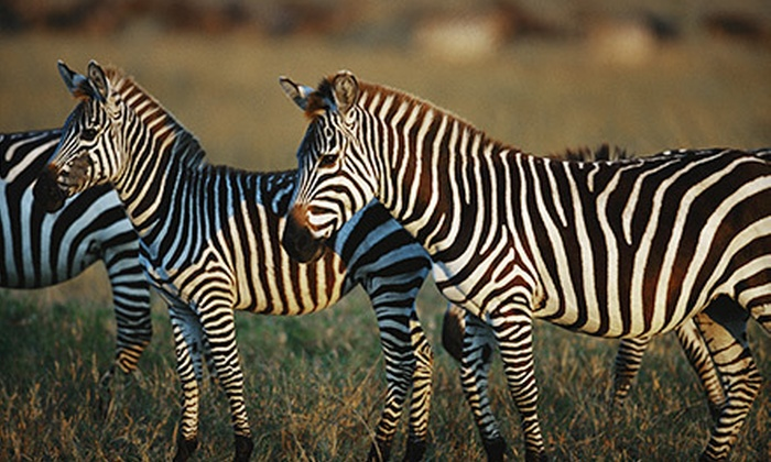 Wine to Wildlife Festival - Boerne: Wine to Wildlife Festival for Two or Four Adults or One Child on March 9 at The Serengeti Resort (Up to 51% Off)