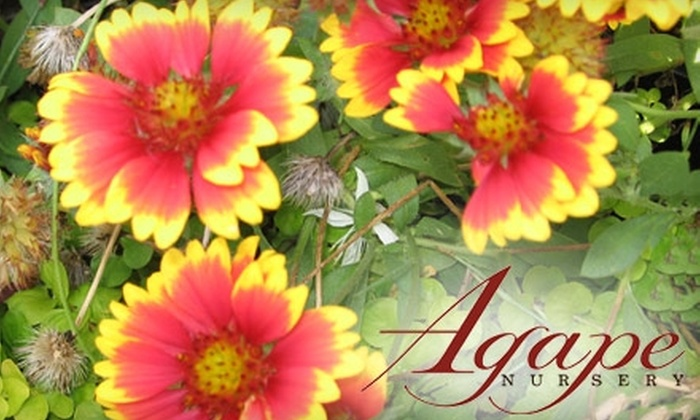 Agape Nursery & Landscaping - Macon: $10 for $20 Worth of Trees, Plants, Shrubs, and More at Agape Nursery & Landscaping