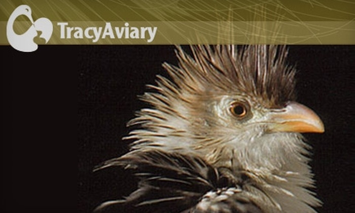 Tracy Aviary - Central City/ Liberty Wells: $8 for Admission for Two and Two Tickets to Avian Encounters at Tracy Aviary (Up to $16 Value)