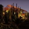 Desert Botanical Garden – Up to Half Off Gala Event