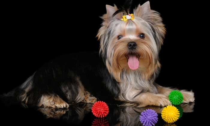 wholePET - South Fork: Pet Supplies at wholePET (Half Off). Two Options Available.