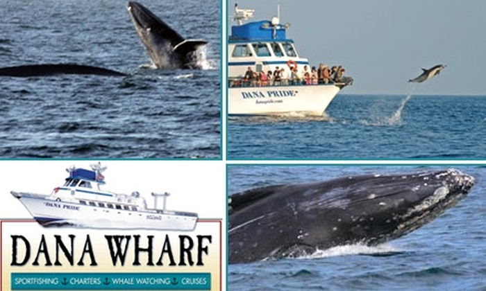 Dana Wharf Sportfishing & Whale Watching - Dana Point: $14 for One Ticket Aboard the Blue-Whale-Watching Sunset Cruise from Dana Wharf Sportfishing & Whale Watching ($29 Value)