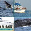 52% Off Whale-Watching Sunset Cruise