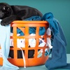 Up to 62% Off Laundry or Dry Cleaning Services