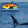 $37 Off Whale-Watching Tour