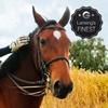 Half Off Private Horseback-Riding Lessons