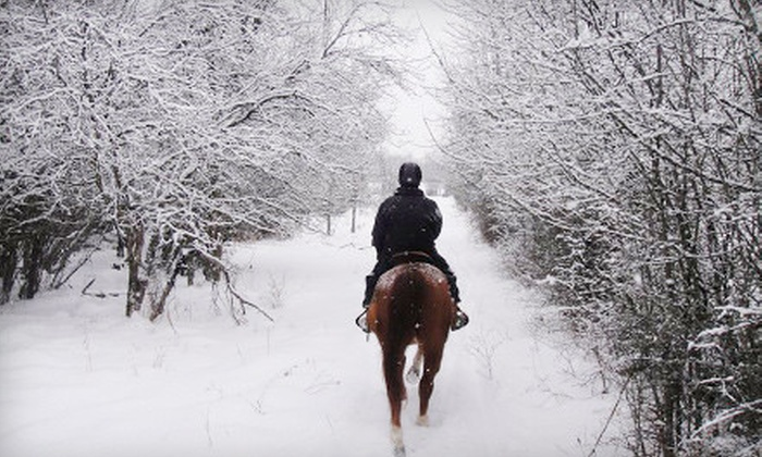 Bay Ranch Lodge and Equestrian Centre - Bobcaygeon: One-Hour Trail Ride with 30-60 Minute Lesson for One, Two, or Four at Bay Ranch Lodge and Equestrian Centre in Bobcaygeon (Up to 67% Off)
