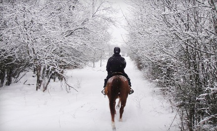 1-Hour Trail Ride with 30-60 Minute Lesson and Unlimited Hot Chocolate for 1 (a $65 value) - Bay Ranch Lodge and Equestrian Centre in Bobcaygeon