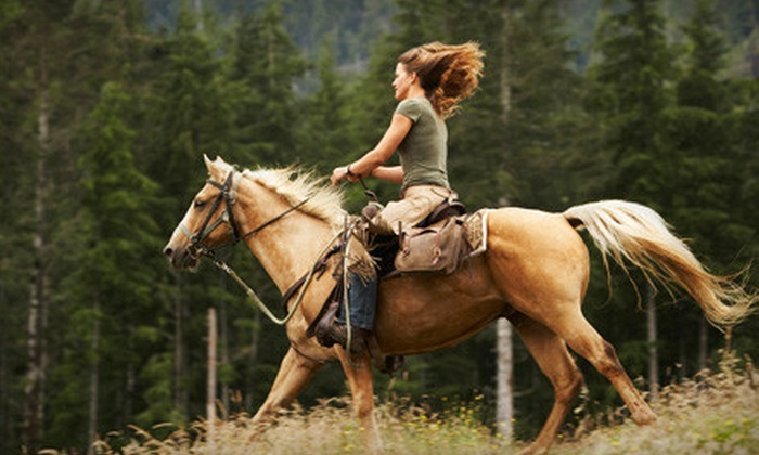 Sunwest Equine Services - Onoway: One or Two Horseback-Riding Lessons at Sunwest Equine Services in Onoway (Up to 57% Off)