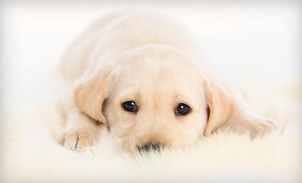 Doggy Spa Bath (a $45 value) - Trail Animal Hospital in Miami