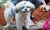 HarlemDoggieDaySpa - Harlem: $35 for $80 Worth of Pet-Grooming Services at HarlemDoggieDaySpa