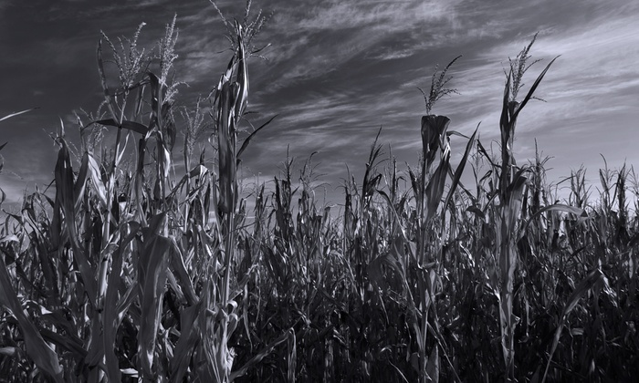 Heap's Giant Pumpkin Farm & Haunted Corn Maze - Clublands: Heaps Haunted Corn Maze Visit with Hayride for Two, Four, or Six (Up to 52% Off)