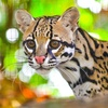 34% Off Annual Friends of the Greenville Zoo Membership
