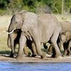 37% Off African Tour and Safari