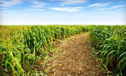 Corn-Maze Admission and Hayrides for 2 (a $18 value) - Fun Acres in South Rockwood