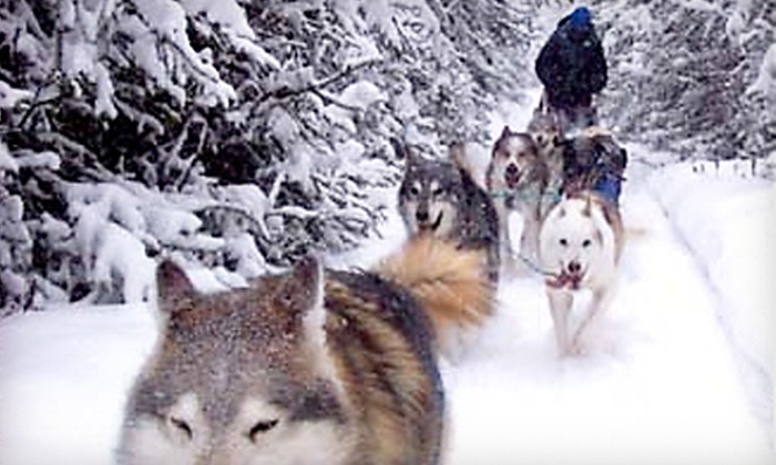 Where Spirits Walk - Newby Road: 30- or 60-Minute Dog-Sled Tours for a Child or Adult from Where Spirits Walk in North Pole (Up to 56% Off)