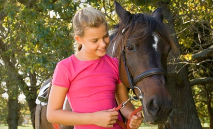 Two 60-Minute Horseback-Riding Lessons (a $90 value) - Lone Star Horsemanship, Inc. in Magnolia