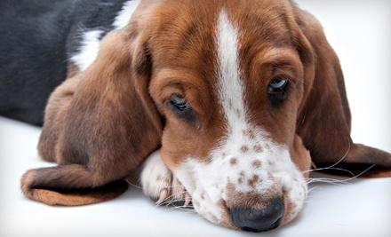 $40 Groupon to Gentle Pet Grooming - Gentle Pet Grooming in Tulsa