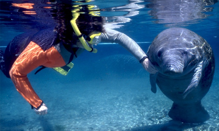 Native Vacations - Crystal River: $25 for a Swim with Manatees Tour Package with Equipment Rental from Native Vacations in Crystal River ($55 Value)