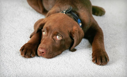Mass Carpet Cleaning, LLC - Mass Carpet Cleaning, LLC in