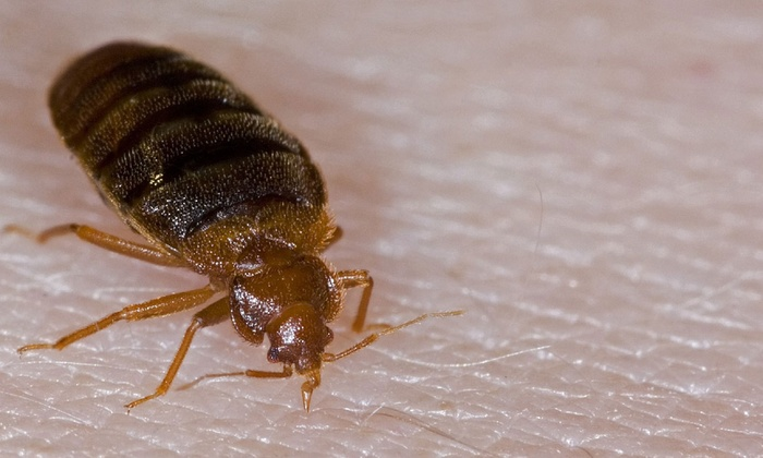 Ameriguard Exterminating - Phoenix: $120 for $300 Worth of Ameriguard Exterminating Bed Bug Treatment — Ameriguard Exterminating