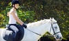 Up to 59% Off Horseback-Riding Lessons in Sarasota
