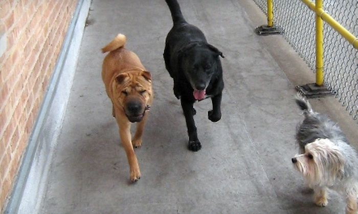 Wet Nose For Dogs - Forest Park: $60 for Five Days Of Dog Day Care at Wet Nose For Dogs in Forest Park ($125 Value)