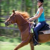 Up to 54% Off Horseback Riding in Lake Worth