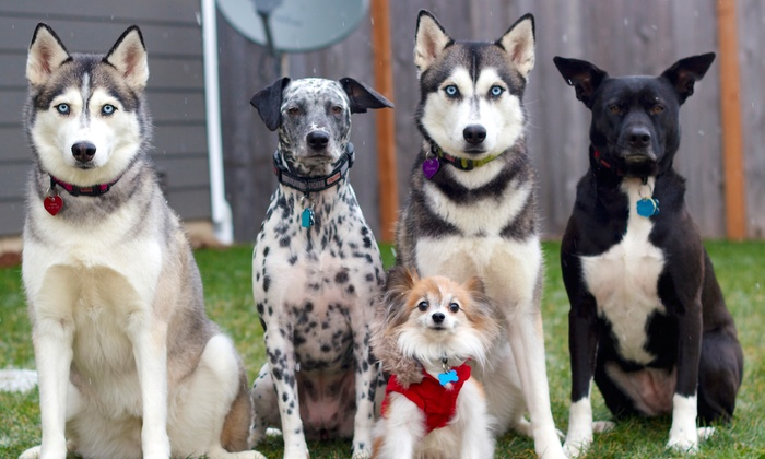 Cristina's Pawfect Photography - Seattle: Photo Shoot for Family and Two, Three, or Four Dogs from Cristina's Pawfect Photography (Up to 72% Off)