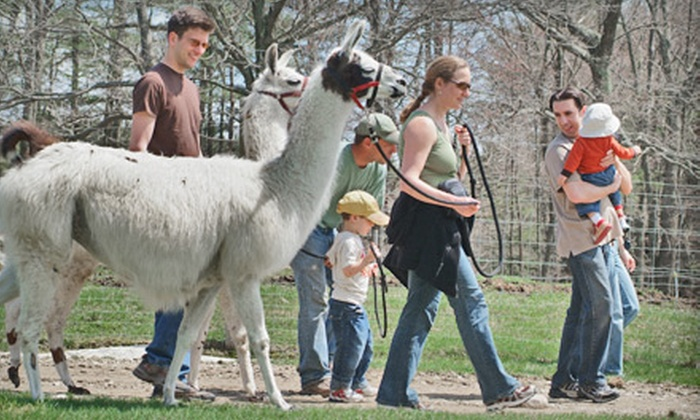 Charmingfare Farm - Candia: $38 for Zoo Admission, Bag of Oats for Petting Zoo, and Horseback Trail Ride or llama Trekking Hike at Charmingfare Farm in Candia, New Hampshire (Up to $85 Value)