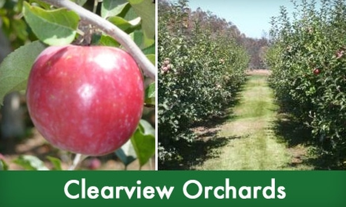 Clearview Orchards - Watsonville: $10 for $20 Worth of Tree-Fresh Organic Apples Plus an Orchard Tour at Clearview Orchards in Watsonville