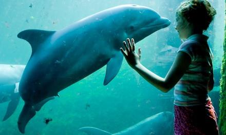 Dolfinarium: beleef een spetterende dag in het beroemde waterpark met zeezoogdieren én diverse waterattracties