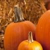 Up to 51% Off Harvest-Festival Outing in Hesperia