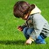 Half Off Lawn Fertilization and Weed Treatment
