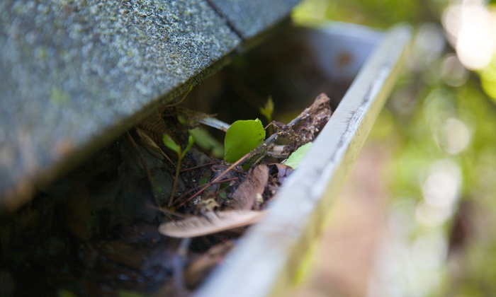 All Day Projects - Portland: 125 Linear Feet of Gutter-Cleaning Services from All Day Projects (50% Off)