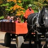 44% Off Hay Ride at Charmingfare Farm