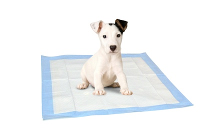 AKC Puppy Pads in a Box (150 Ct.)