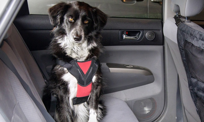 ASPCA Car Pet Barrier or Safety Harness: ASPCA Car Pet Barrier or a Medium or Large Car-Safety Harness (Up to 44% Off). Free Returns.
